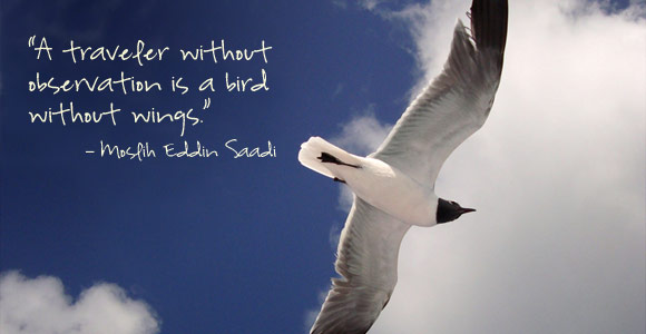 War Related Bird Claw Quote: A Bird Without Wings
