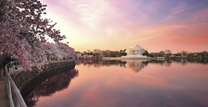 Cherry Blossoms around the DC Tidal Basin