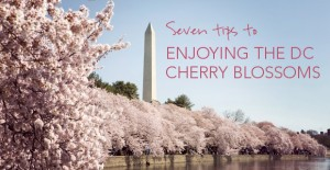 7 Tips to Enjoying the DC Cherry Blossoms