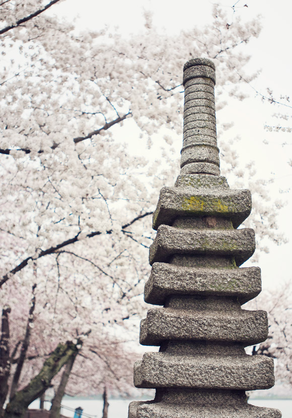 Japanese Pagoda in DC with cherry blossoms
