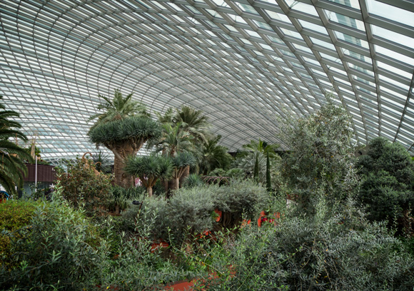 Flower Dome at Gardens by the Bay, Singapore