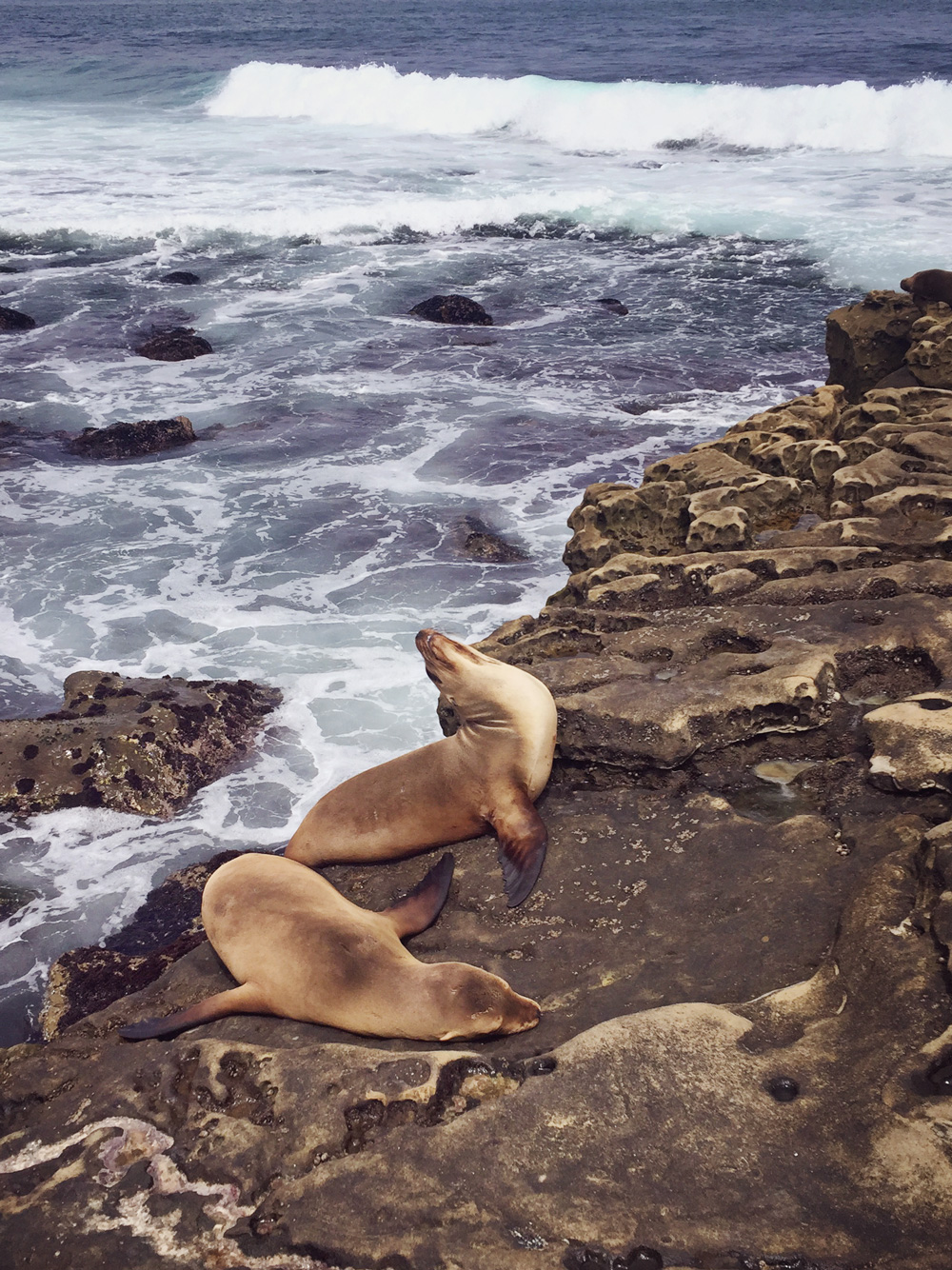 Hundreds Of Sea Lions And Seals Can Be Found Sun Bathing On The Rocks Cliffs Careful Not To Get Too Close As They Are Very Territorial Will Bite