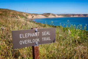 Elephant Seal Lookout, Point Reyes